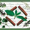 Herbs Vintage Wallpaper Border with garlic & cinnamon sticks
